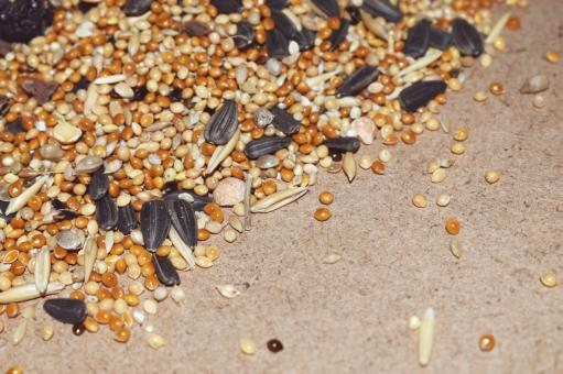 Free Stock Photo of Oats, sunflower seeds and other seeds