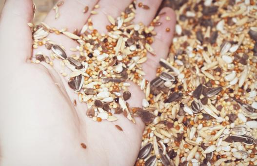 Free Stock Photo of Seeds on a hand