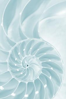 Free Stock Photo of Frosty Nautilus Spiral