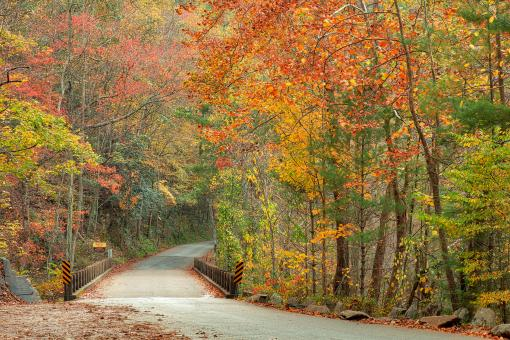 Free Stock Photo of Autumn River Road