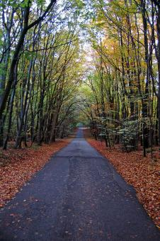 Free Stock Photo of Autumn Forest Road