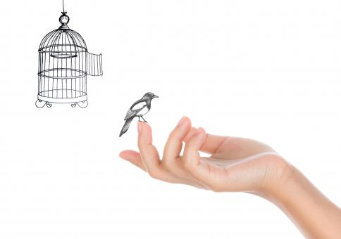 Free Stock Photo of Bird and Open Bird Cage - Freedom Concept