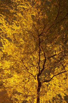 Free Stock Photo of Yellow Leaves on Autumn Tree