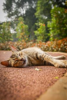 Free Stock Photo of Catnap