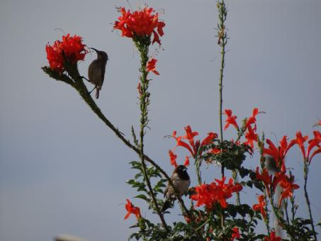Free Stock Photo of Birds Near Red Flowers