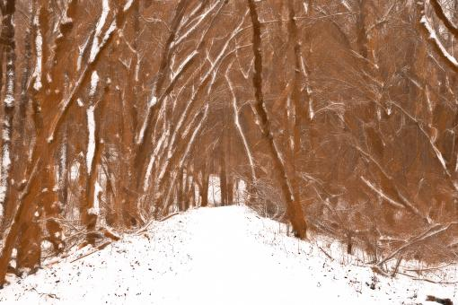 Free Stock Photo of Winter Forest Trail Strokes