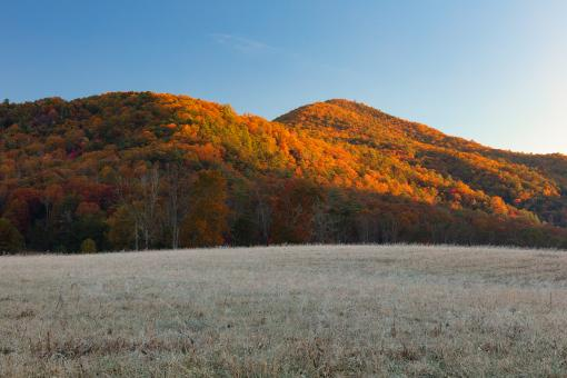 Free Stock Photo of Golden Autumn Thaw - Cades Cove