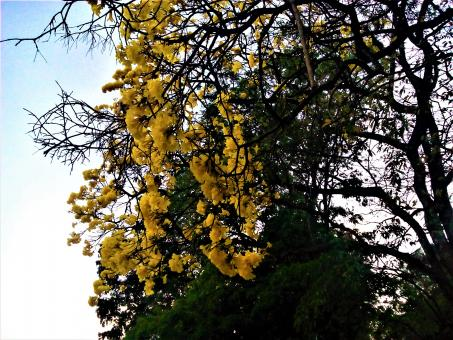 Free Stock Photo of Yellow Flowers on Tree