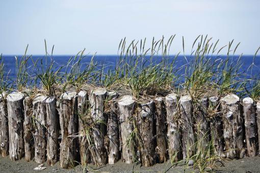 Free Stock Photo of Wooden beach barricade