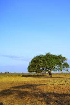 Free Stock Photo of Baluran National Park