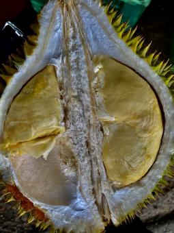 Free Stock Photo of Durian Fruit - Sri Lanka's Famous Fruit