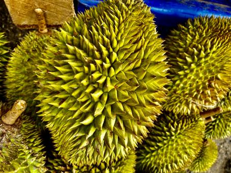 Free Stock Photo of Durian Fruit - Very Tasty and Delicious