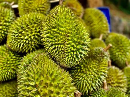 Free Stock Photo of Sri Lanka's Famous and Tasty Durian Fruit