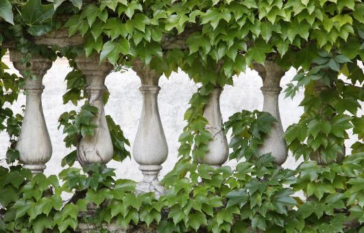 Free Stock Photo of Overgrown Ornate Fence