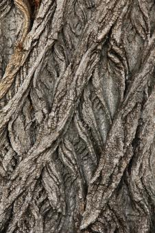 Free Stock Photo of Twisted Tree Trunk Bark Texture