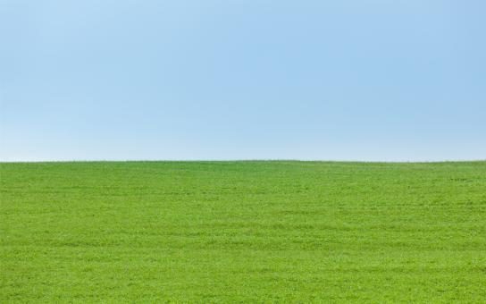 Free Stock Photo of Background of Green Field with Blue Sky