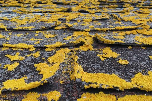 Free Stock Photo of Old Roof shingles