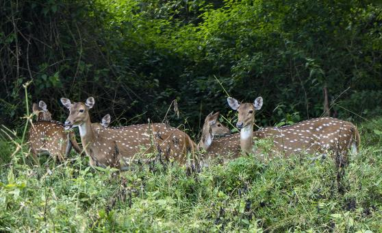Free Stock Photo of Deers in Muthanga, Wayanad