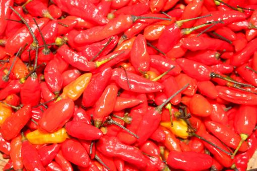 Free Stock Photo of Red chili peppers background