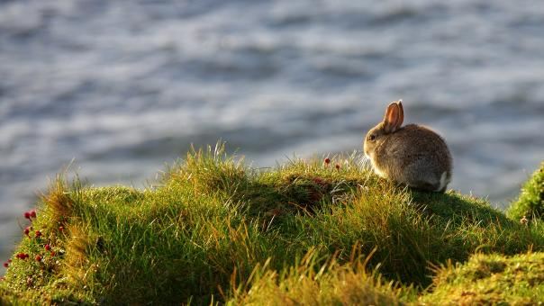 Free Stock Photo of Rabbit on field grass