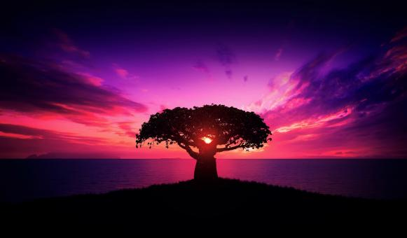 Free Stock Photo of Baobab Tree at Sunset - African Landscape - Calm - Relaxing