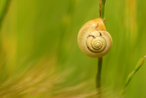 Free Stock Photo of Climbing snail close up