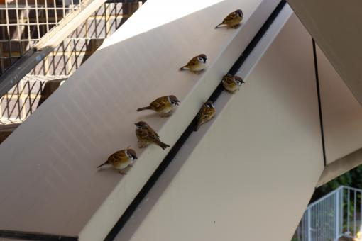 Free Stock Photo of Sparrows sitting beside a staircase