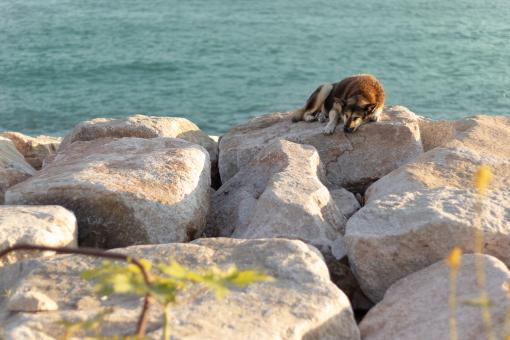 Free Stock Photo of  A brown dog sleeping on the rock beside the sea