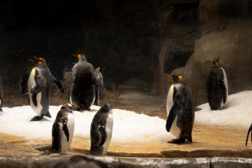 Free Stock Photo of Penguins in a zoo