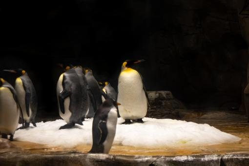 Free Stock Photo of Penguin in a zoo