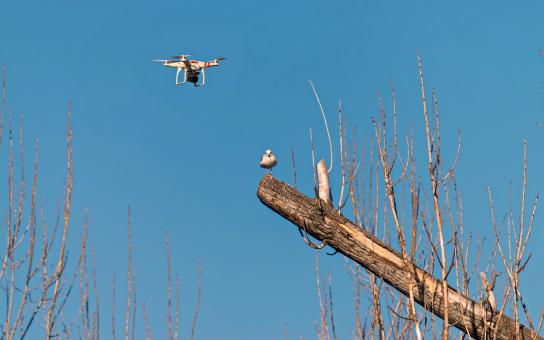 Free Stock Photo of Drone flying near a seagull perched on broken tree trunk