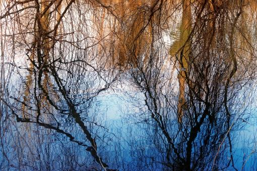 Free Stock Photo of Trees reflecting in the lake water in winter