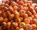 Free Photo - Pumpkin Pile