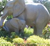 Free Photo - Elephant Love