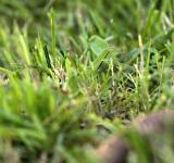 Free Photo - Grass closeup