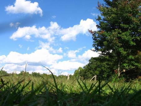 Blue skies, green grass - Free Stock Photo