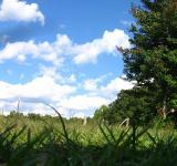 Free Photo - Blue skies, green grass