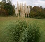 Free Photo - Cattails in the field