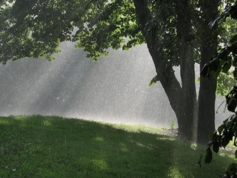 Free Stock Photo of SunShower Created by shawn maxfield