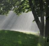 Free Photo - SunShower