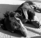 Free Photo - Let sleeping dogs lie