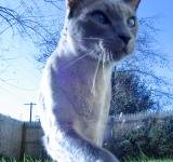 Free Photo - More Blue Cat