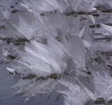 Free Photo - Leeves of ice
