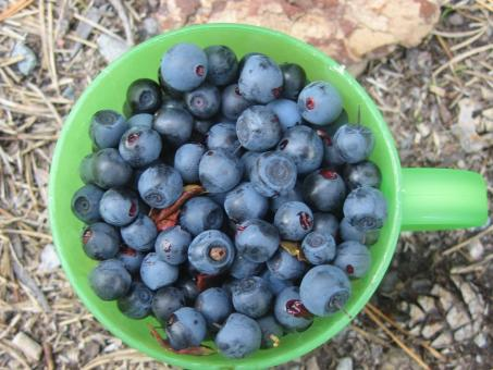 Blueberry in cup - Free Stock Photo