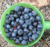Free Photo - Blueberry in cup