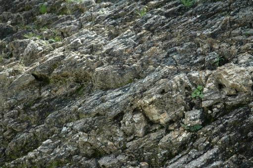 Rocks - Free Stock Photo