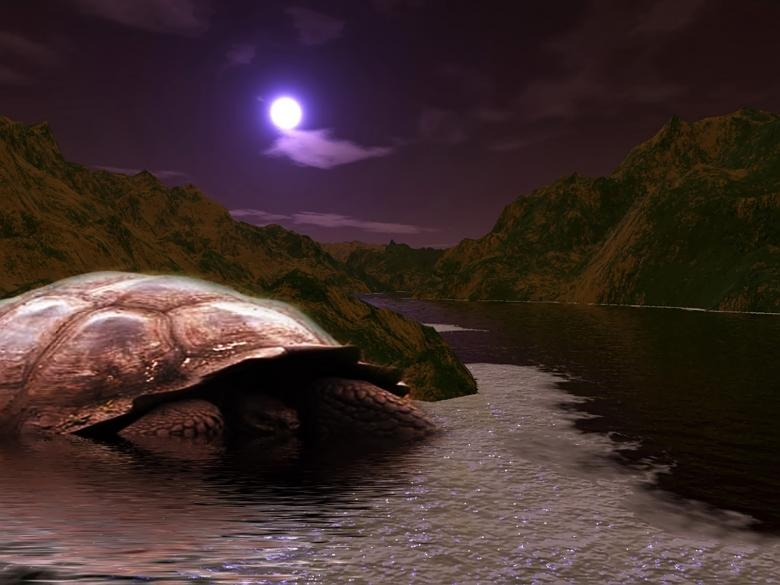 Free Stock Photo of GIANT TURTLE Created by zeev manor