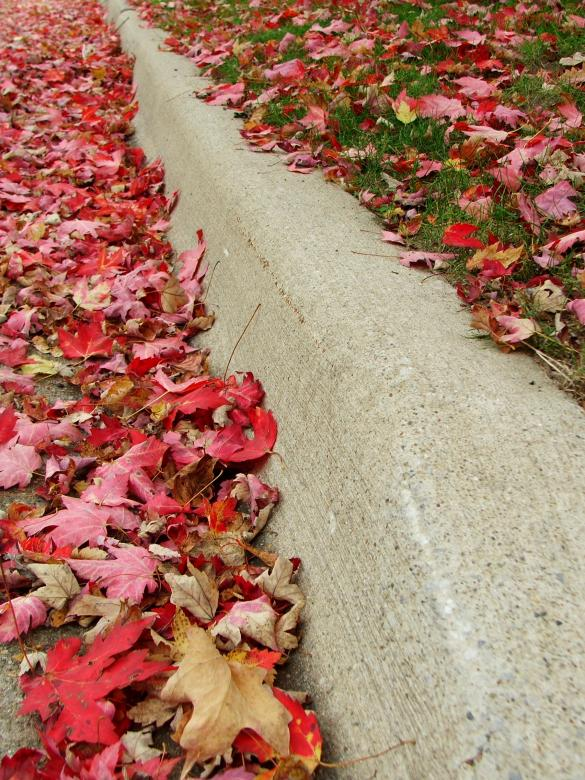 Free Stock Photo of Leaves On A Curb Created by Heather Elaine Kitchen