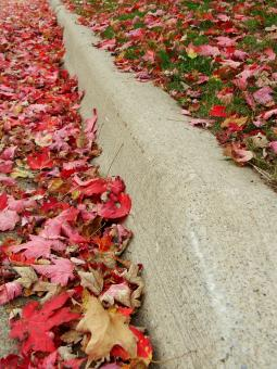Leaves On A Curb - Free Stock Photo