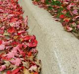 Free Photo - Leaves On A Curb